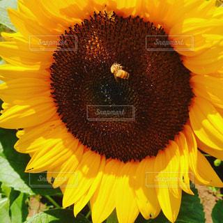 花の写真・画像素材[655112]