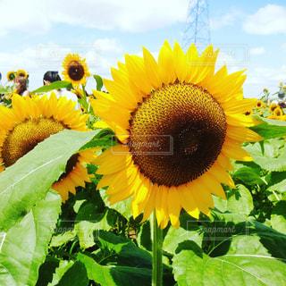 花の写真・画像素材[655113]