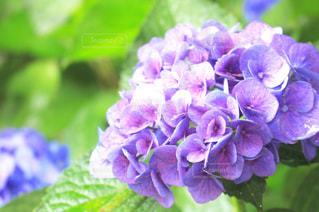 花の写真・画像素材[655293]