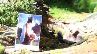 もののけ姫の写真・画像素材[1526995]