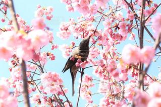 木の枝に座っている鳥の写真・画像素材[1602085]