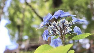 花のクローズアップの写真・画像素材[3995066]