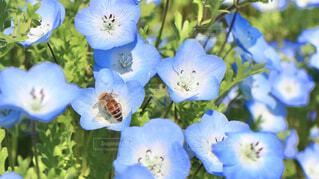 花のクローズアップの写真・画像素材[4332688]