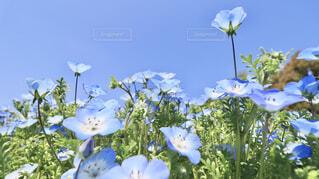 テーブルの上に花の花瓶の写真・画像素材[4332693]