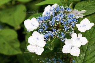 花の写真・画像素材[656748]