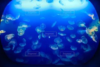 水族館の写真・画像素材[656764]