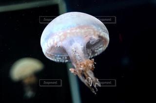 水族館の写真・画像素材[656765]