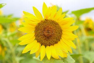 花の写真・画像素材[656775]