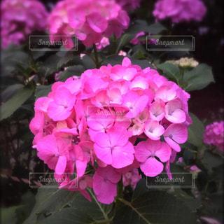 花の写真・画像素材[656783]