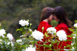 近くの花のアップの写真・画像素材[811957]