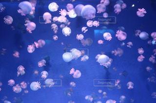 水槽のクラゲの写真・画像素材[3160737]