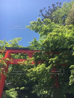 京都の写真・画像素材[678782]