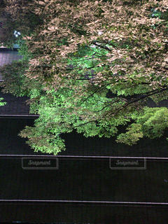 近くの木のアップの写真・画像素材[713966]