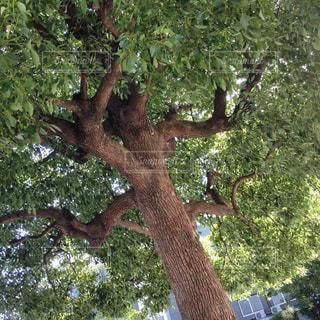 公園の木の写真・画像素材[780343]