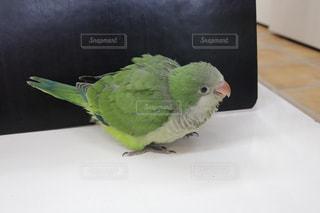 鳥 - No.656055