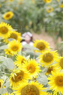 夏の写真・画像素材[656087]