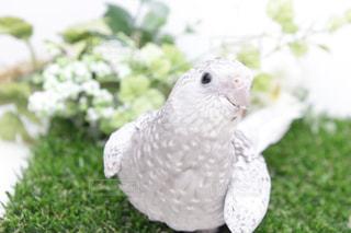 鳥の写真・画像素材[656107]