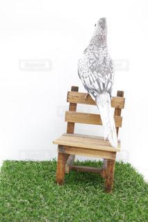 鳥の写真・画像素材[656117]