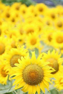 夏の写真・画像素材[656129]
