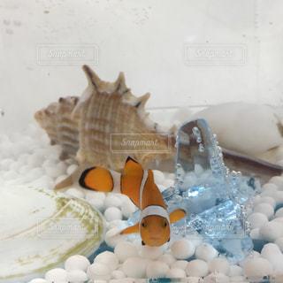 魚の写真・画像素材[656137]