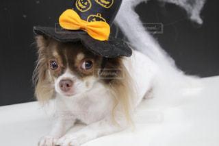 犬の写真・画像素材[656194]