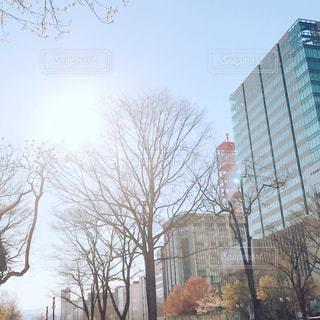 木の隣の建物の写真・画像素材[1187119]