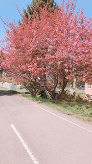 道の端に木 - No.1192295