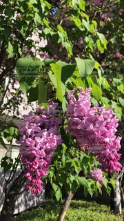 近くの植物に紫の花のアップの写真・画像素材[1197190]