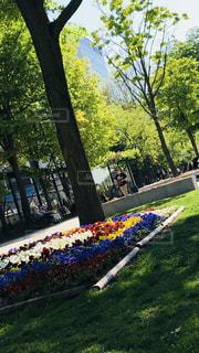 公園の木 - No.1197255