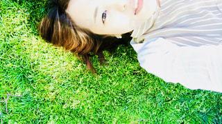 緑と茶色の草の写真・画像素材[1197310]