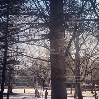冬のリスの写真・画像素材[2017468]