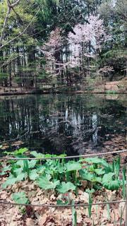 背景の水の庭の写真・画像素材[2079045]