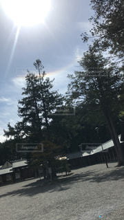 近くの木のアップの写真・画像素材[2079054]