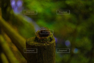 自然の写真・画像素材[656588]