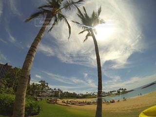 ハワイの写真・画像素材[657248]