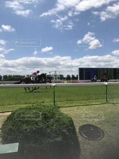 競走馬の写真・画像素材[657071]