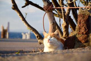 猫の写真・画像素材[657336]