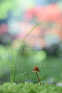 苔の写真・画像素材[657358]