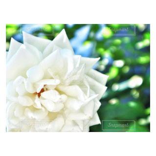 花の写真・画像素材[657449]