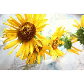 花の写真・画像素材[690342]