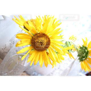 花の写真・画像素材[690343]