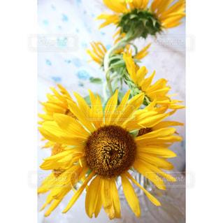 花の写真・画像素材[690344]