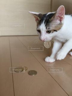 猫の写真・画像素材[658778]