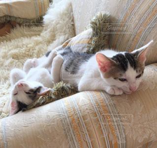 猫の写真・画像素材[659044]