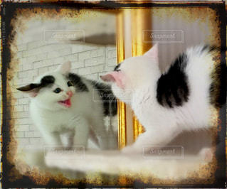 猫 - No.669730