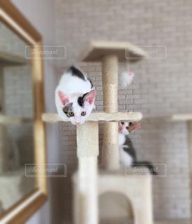 猫の写真・画像素材[669733]