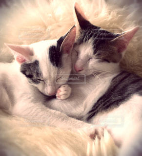 猫の写真・画像素材[675422]