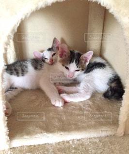 猫の写真・画像素材[675423]