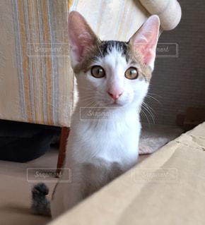猫の写真・画像素材[675424]