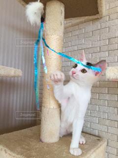 猫の写真・画像素材[675426]